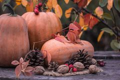 Calabaza, calabaza Fondo feliz del día de la acción de gracias Autumn Thanksgiving Pumpkins sobre el fondo de madera, aún-vida HO Fotos de archivo libres de regalías