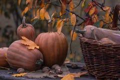Calabaza, calabaza Fondo feliz del día de la acción de gracias Autumn Thanksgiving Pumpkins sobre el fondo de madera, aún-vida HO Imagenes de archivo
