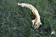 Calabaza formada cisne de la caída Imagen de archivo