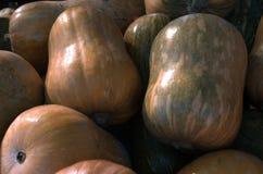 Calabaza fresca Verduras alimento dietético Vehículos para cocinar Foto de archivo