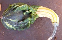 Calabaza ornamental, Autumn Wings, pepo del Cucurbita Foto de archivo