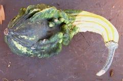 Calabaza ornamental, Autumn Wings, pepo del Cucurbita Foto de archivo libre de regalías