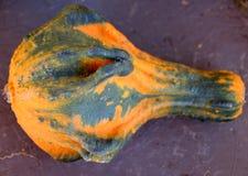 Calabaza ornamental, Autumn Wings, pepo del Cucurbita, Fotografía de archivo