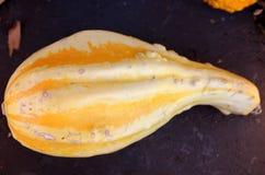 Calabaza ornamental con el cuello, Autumn Wings, pepo del Cucurbita Imagenes de archivo