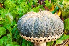 Calabaza puesta en cesta en el jardín imagen de archivo
