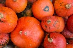 Calabaza roja del kuri Foto de archivo libre de regalías