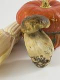 Calabaza, seta, maíz en el fondo blanco Imágenes de archivo libres de regalías