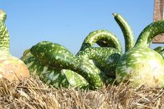 Calabaza verde en el heno Fotografía de archivo