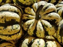 Calabaza verde y amarilla Imagen de archivo libre de regalías