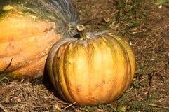 Calabaza, verduras, comida, ingrediente, orgánico Foto de archivo libre de regalías