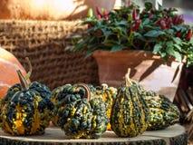 Calabaza verrugosa decorativa Foto de archivo libre de regalías