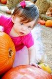 Calabaza y bebé grandes Fotografía de archivo libre de regalías