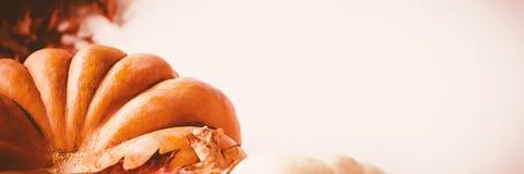 Calabaza y calabaza con las hojas de otoño en el fondo blanco Foto de archivo libre de regalías
