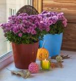 Calabaza y crisantemo cerca de una vela ardiente en la ventana Fotografía de archivo libre de regalías