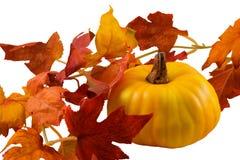 Calabaza y decoración de las hojas de la caída Foto de archivo libre de regalías