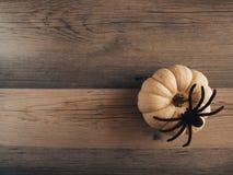 Calabaza y fondo de la araña Imagen de archivo