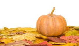Calabaza y hojas de otoño en blanco Fotografía de archivo libre de regalías
