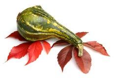 Calabaza y hojas - decoración de la acción de gracias Fotos de archivo