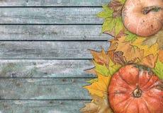 Calabaza y hojas para la acción de gracias en la tabla de madera Foto de archivo