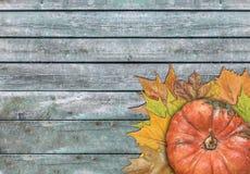 Calabaza y hojas para la acción de gracias en la tabla de madera Foto de archivo libre de regalías