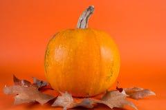 Calabaza y hojas secas del otoño de la caída aisladas en fondo anaranjado Imágenes de archivo libres de regalías