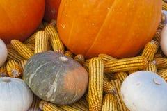 Calabaza y maíz Imagenes de archivo