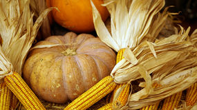 Calabaza y maíz, donante del día de fiesta del otoño de las gracias Fotos de archivo libres de regalías