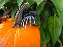 Calabaza y mano esquelética asustadiza en jardín fotografía de archivo