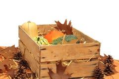 Calabazas Imagen de archivo libre de regalías