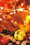 Calabazas Imagen de archivo