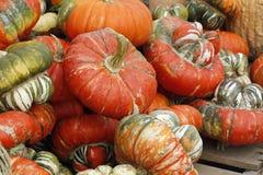Calabazas anaranjadas. Foto de archivo libre de regalías