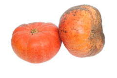 Calabazas anaranjadas Imagenes de archivo