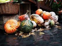 Calabazas anaranjadas Fotos de archivo