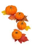 Calabazas anaranjadas alineadas en un semicírculo Foto de archivo