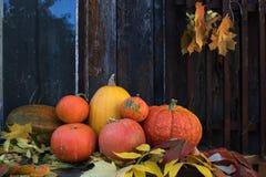 Calabazas anaranjadas brillantes grandes en viejo fondo de madera oscuro Imágenes de archivo libres de regalías