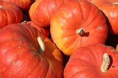 Calabazas anaranjadas brillantes grandes, mercado de los granjeros Foto de archivo libre de regalías