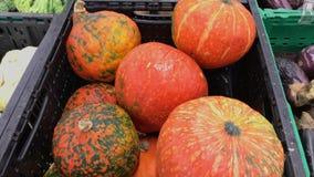 Calabazas anaranjadas de la ondulación en el supermercado cantidad 4k Tiro del primer metrajes