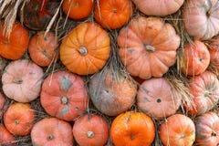 Calabazas anaranjadas en la exhibición en el mercado de los granjeros Concepto de la cosecha y de la acción de gracias imagen de archivo