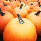 Calabazas anaranjadas grandes Imagenes de archivo