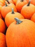 Calabazas anaranjadas grandes en el mercado Imagen de archivo