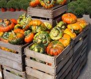Calabazas anaranjadas y verdes Fotos de archivo libres de regalías