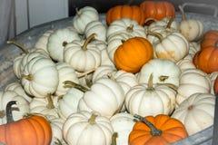 Calabazas blancas y anaranjadas Fotografía de archivo
