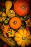 Calabazas clasificadas para la acción de gracias y Halloween Fotografía de archivo