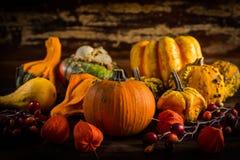 Calabazas clasificadas para la acción de gracias y Halloween Fotos de archivo libres de regalías