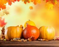 Calabazas coloreadas otoño en la tabla de madera Imágenes de archivo libres de regalías