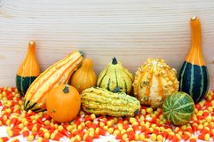 Calabazas coloridas con el caramelo del diente del maíz Fotografía de archivo libre de regalías