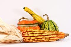 Calabazas coloridas con maíz Fotografía de archivo libre de regalías