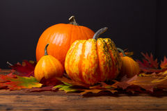 Calabazas con las hojas coloridas del otoño Fotos de archivo