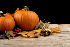 Calabazas con las hojas de otoño para el día de la acción de gracias en fondo negro Fotos de archivo libres de regalías