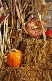 Calabazas con los tallos del maíz y balas de heno en el tiempo de cosecha Fotos de archivo